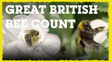 Great British Bee Count at Severn View Academy