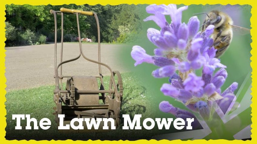 Are Lawn Mowers Killing Off Bees?
